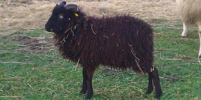 Psychotherapie Oberhausen schwarzes Schaf